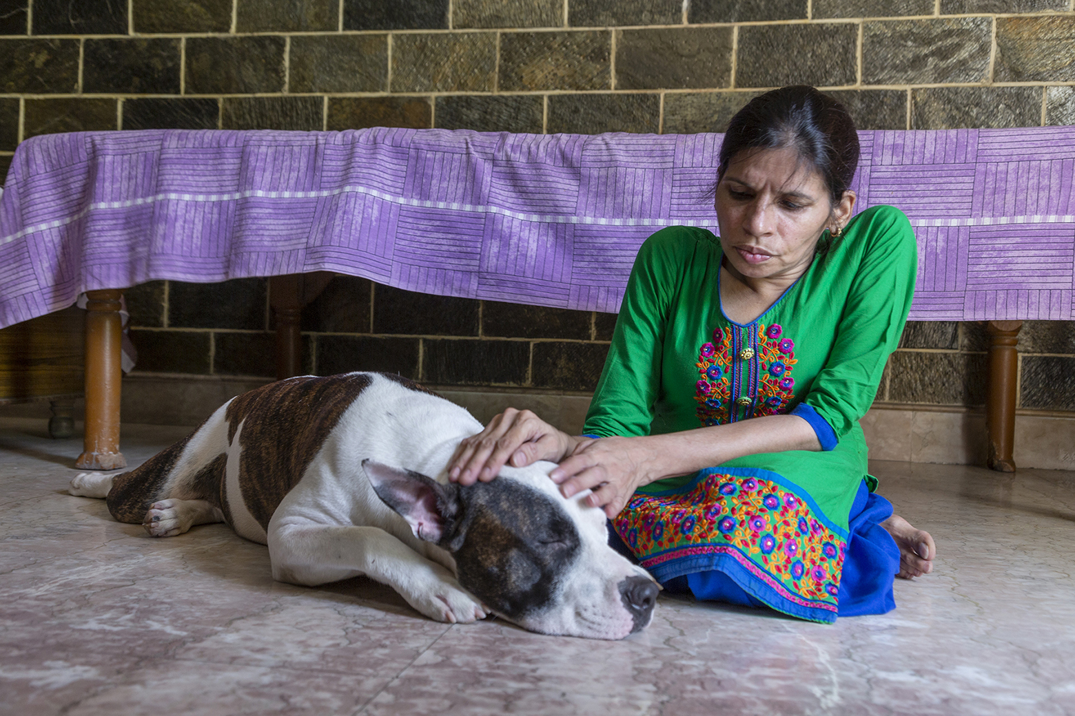 Kavita wearing green kameez and blue salwar is sitting crosslegged on the floor next to Dollar, her chocolate-brown and white dog who is 18 months old. Dollar is lying with his head resting on his paws. Kavita is stroking his head.