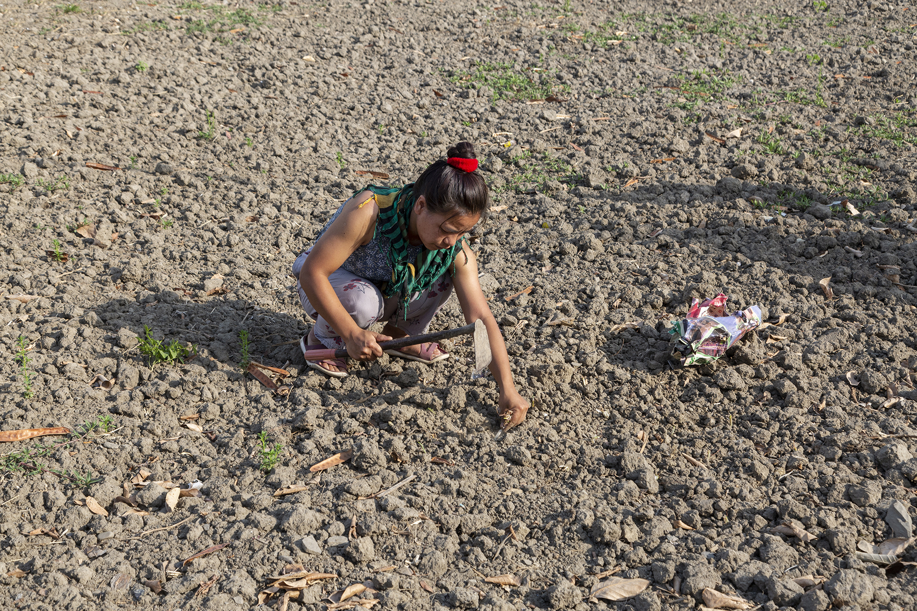 Ngaihnem squatting in a ploughed field made up of clods of dark grey soil. She holds a hoe in her right hand and her left hand reaches down to plant a seedling.