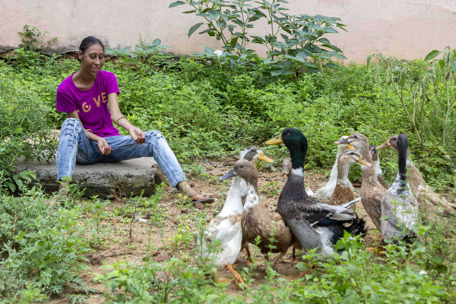 Roji in purple T-shirt and light blue tight jeans is sitting outdoors on a large, flat slab. Wild plants and weeds grow all around her. In front of her is a flock of brown, white, black and grey ducks. She is holding out both arms and cupped palms towards them. Her right palm holds what appears to be rice or some other white-coloured feed.