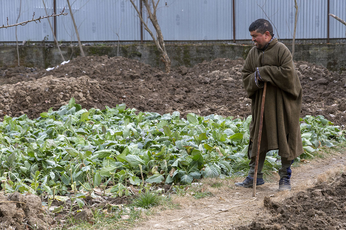 Tariq is standing outdoors, leaning on his cane, smiling while looking down at a leafy bed of Kashmiri saag (spinach)