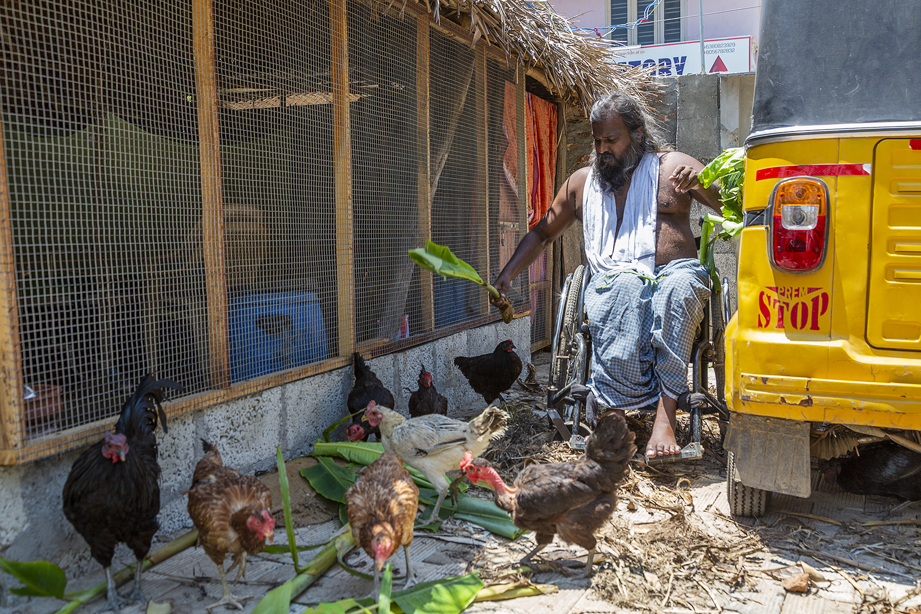 Vallinayagam sits in his wheelchair facing us, in the gap between his auto and a building. The front wall of the building is made of wire mesh. Vallinayagam is holding a plantain leaf and leaning down towards a flock of hens. There are more leaves strewn on the ground and there are four black hens, three brown hens and one white hen in front of him.